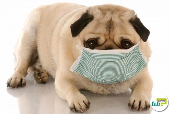 get rid of kennel cough in dogs
