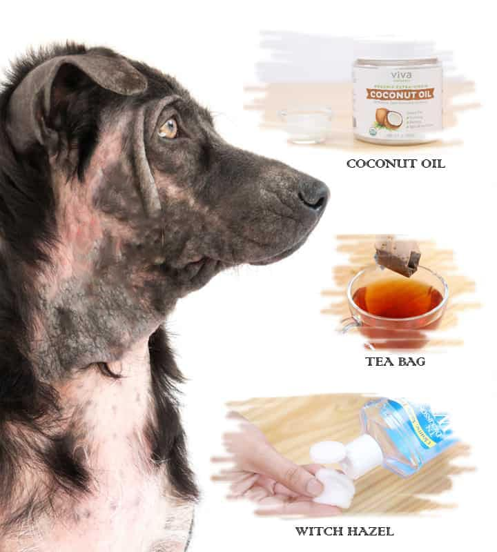 Home Remedies for Hot Spots in Dogs