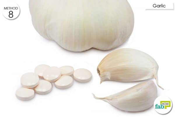 garlic for kennel cough