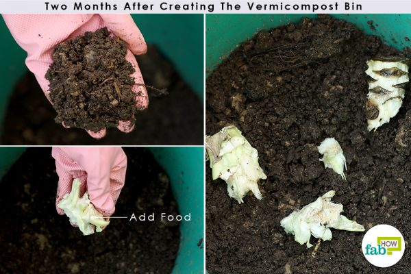 two month old vermicompost bin