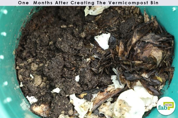 one month worm bin progress