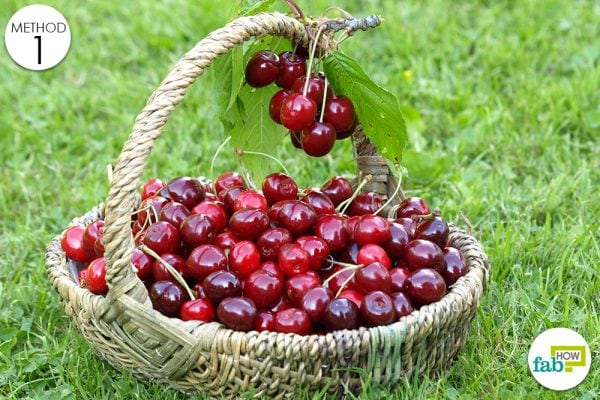 cherries for uric acid