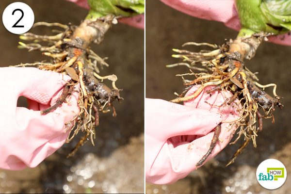 check unhealthy roots